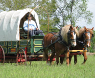 horses pulling wagon in southbend
